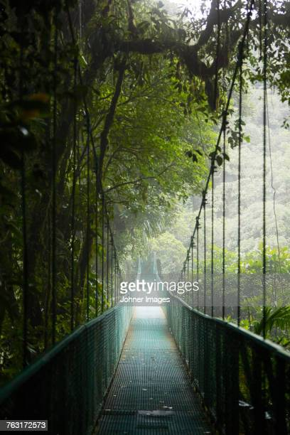 View of hanging bridge in forest