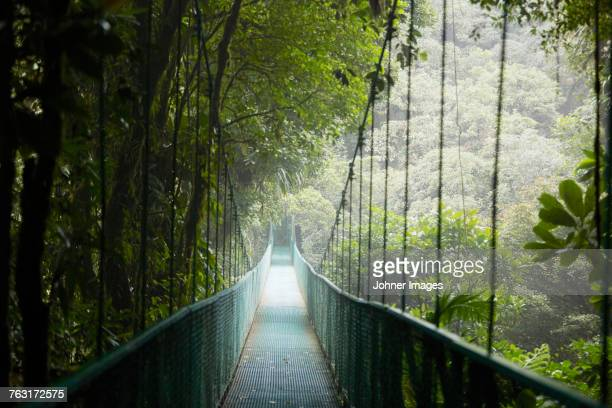 view of hanging bridge in forest - costa rica stock photos and pictures