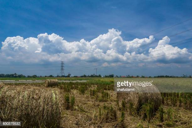 view of haystack role at paddy field after harvest season - shaifulzamri imagens e fotografias de stock