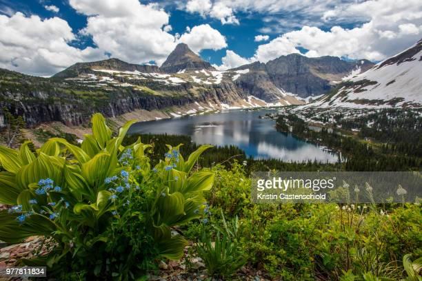 view of hidden lake with reynolds mountains, glacier national park, montana, usa - parque nacional glacier - fotografias e filmes do acervo