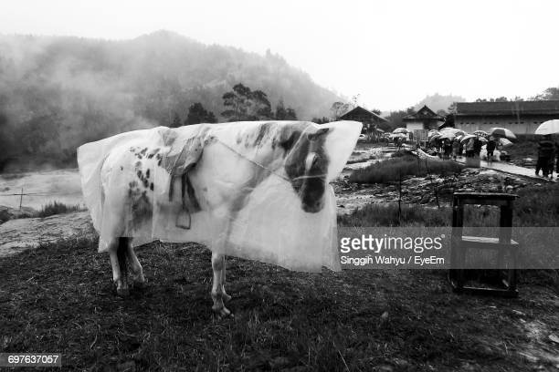 View Of Horse In Pasture