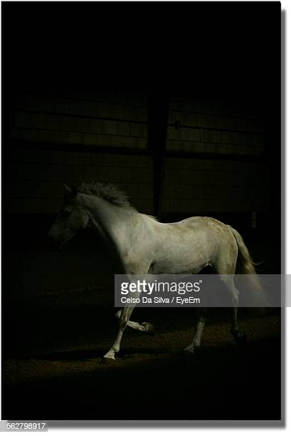 View Of Horse Running In Stable At Night