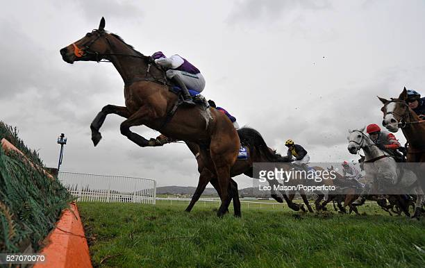View of horses and riders approaching a fence in the Royal Sun Alliance Chase during the 2008 Cheltenham Festival in Cheltenham England on 13th March...