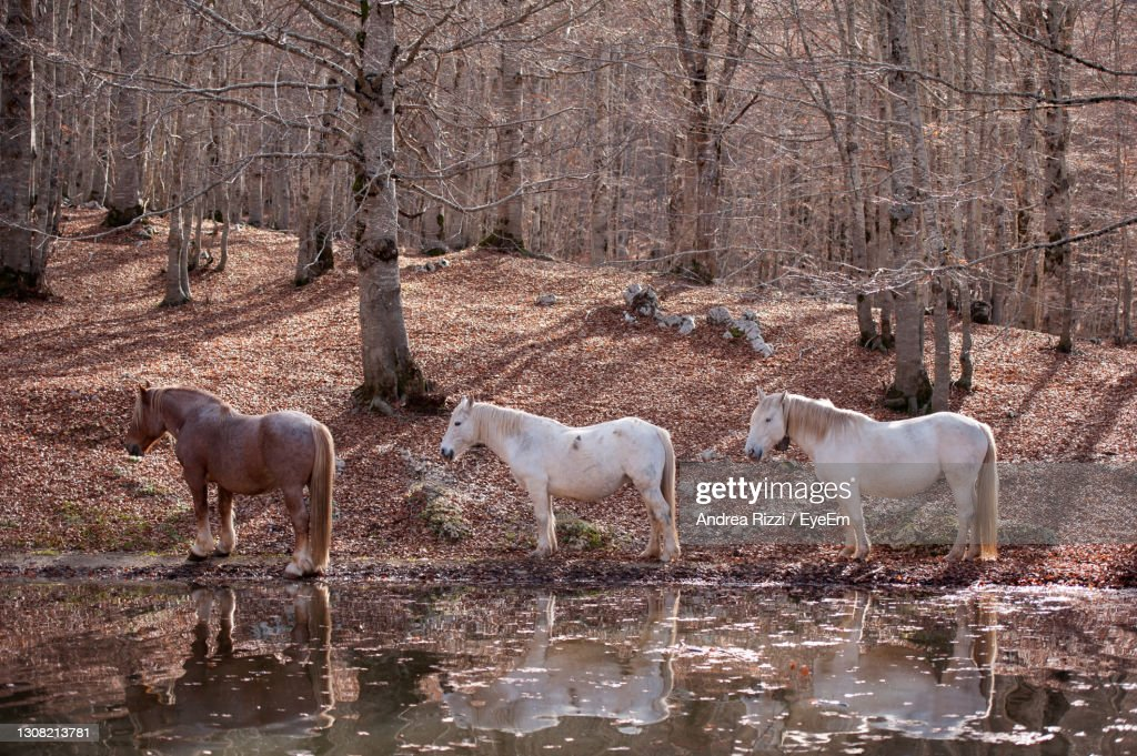 View Of Horses In The Lake : ストックフォト
