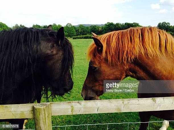 view of horses on farm - port talbot stock pictures, royalty-free photos & images