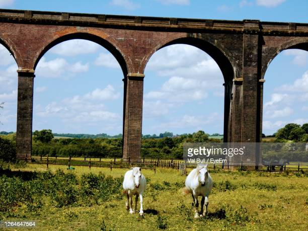 view of horses on field against sky - northamptonshire stock pictures, royalty-free photos & images