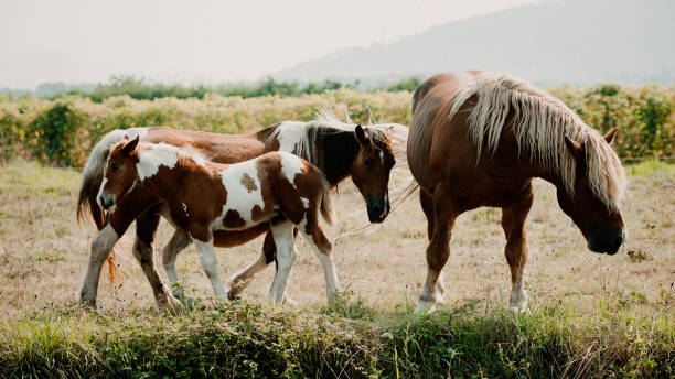 View Of Horses On Field
