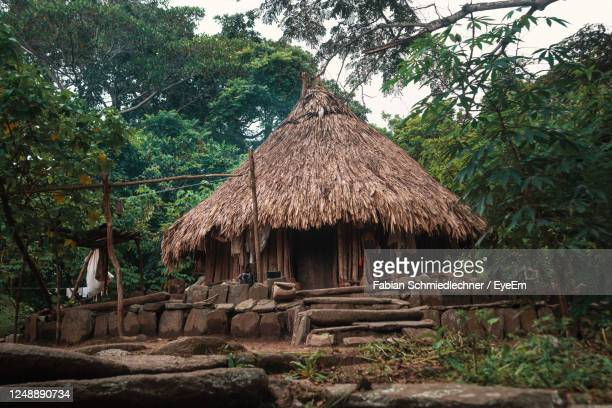 view of hut inside dense jungle - colombia stock pictures, royalty-free photos & images