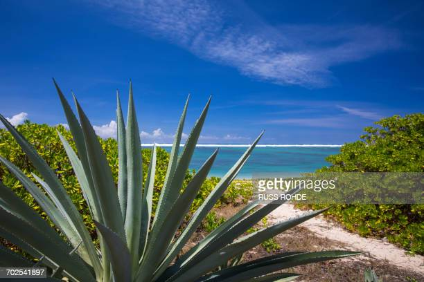 View of Indian Ocean and tropical plants, Reunion Island