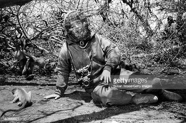 View of Italian actress Elsa Martinelli dressed in a padded suit and protective facemask sits on the ground with several monkeys during the filming...