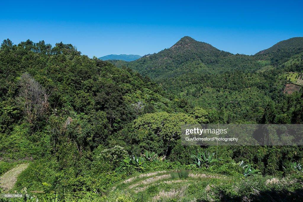 Blick auf den Dschungel und Reis Reisfeld : Stock-Foto