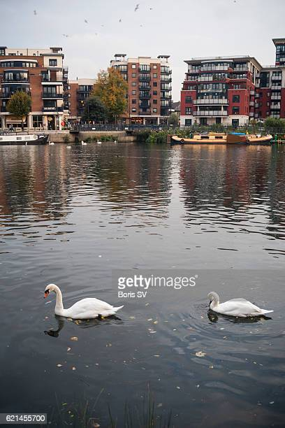 view of kingston upon thames from the riverbank, england - kingston upon thames stock pictures, royalty-free photos & images