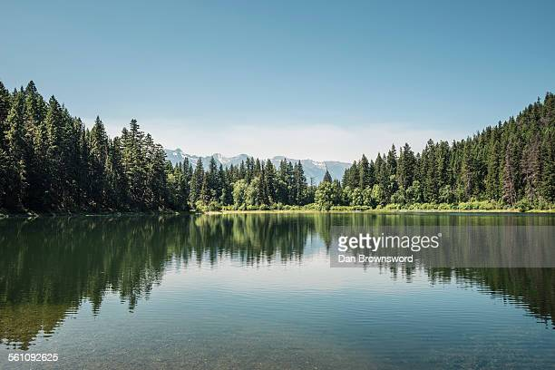 view of lake and forests, british columbia, canada - lago imagens e fotografias de stock