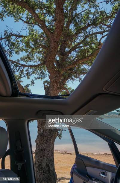 View of lake and tree through an open car door and sunroof