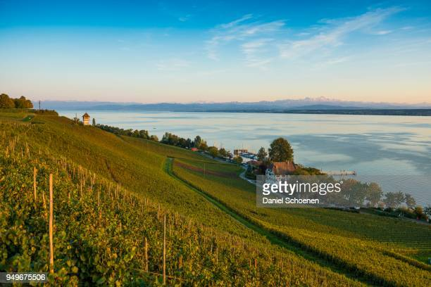 View of Lake Constance and vineyards, Meersburg, Baden-Wuerttemberg, Germany