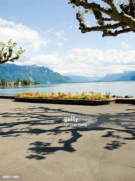 view of lake geneva with shadow on path - lyn holly coorg stock pictures, royalty-free photos & images