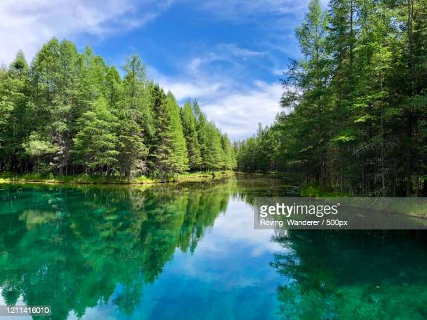 view of lake, kitch-iti-kipi, michigan, usa - michigan stock pictures, royalty-free photos & images