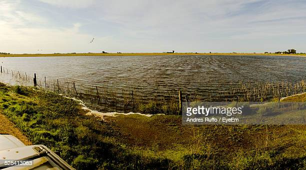 view of lake - andres ruffo stock pictures, royalty-free photos & images