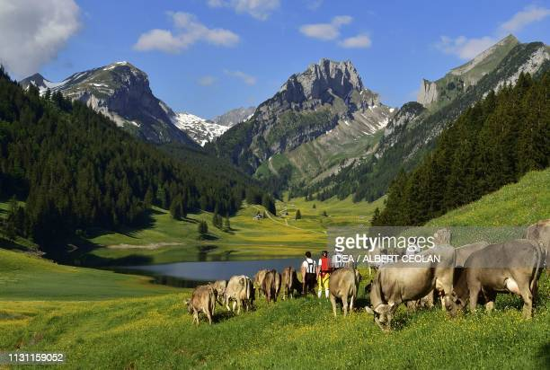 View of Lake Samtisersee, cattle and shepherds in the foreground, Canton of Appenzell Innerrhoden, Switzerland.