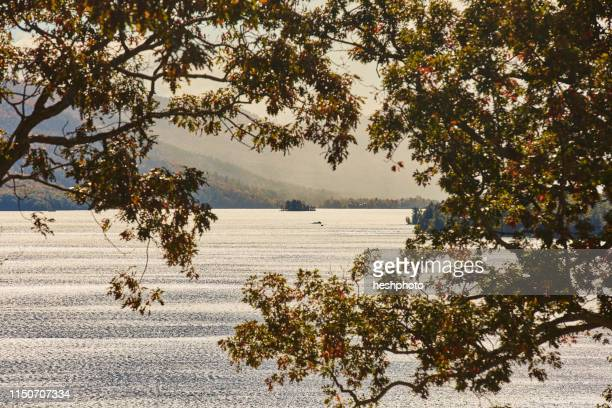 view of lake through trees - heshphoto stock pictures, royalty-free photos & images