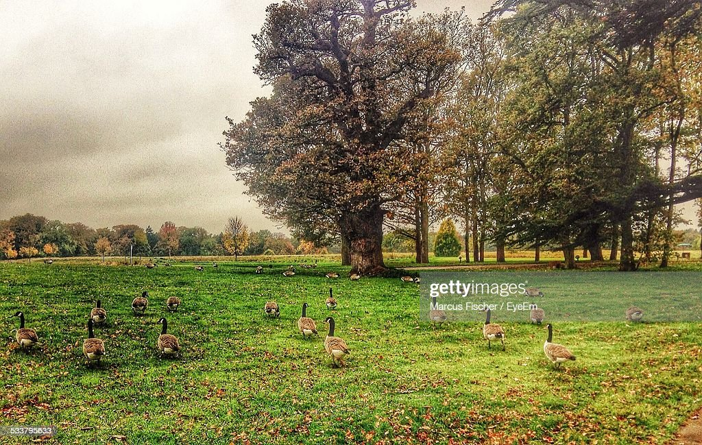 View Of Landscape And Ducks : Foto stock