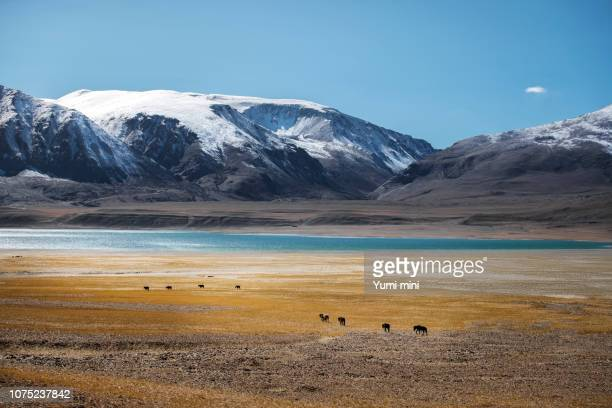 view of landscape at leh ladakh district ,norther part of india - kashmir stock photos and pictures