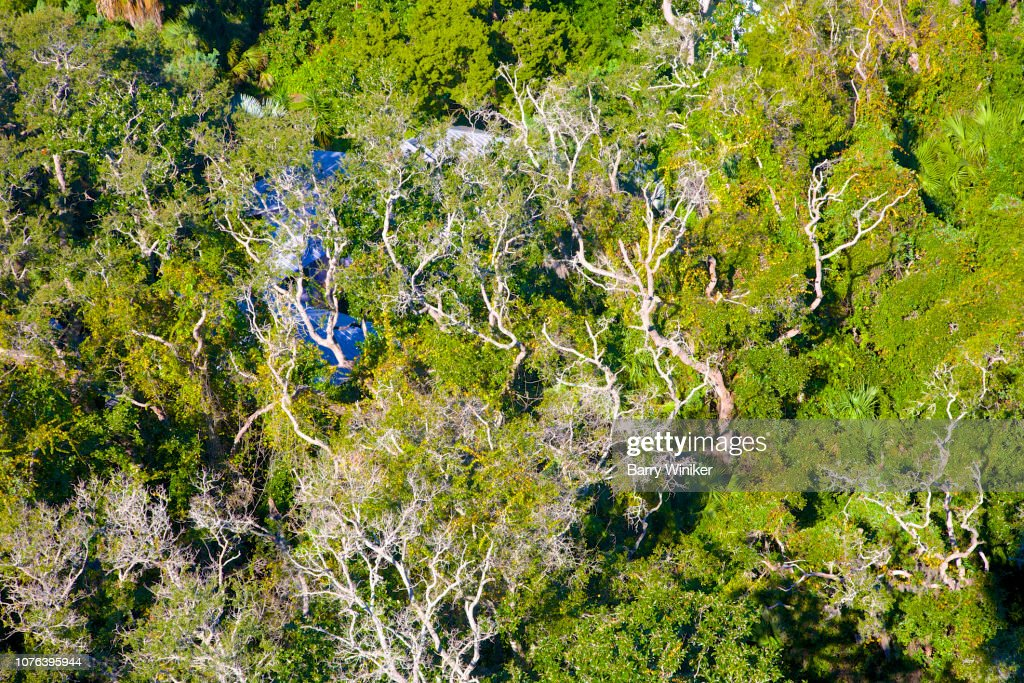 View of live oaks with Spanish moss from up high in St. Augustine : Stock Photo