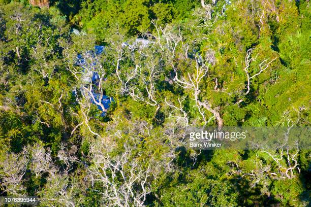 view of live oaks with spanish moss from up high in st. augustine - st augustine lighthouse stock photos and pictures