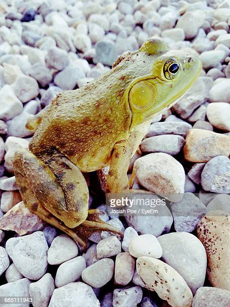 view of lizard on rocky surface - iguana family stock photos and pictures