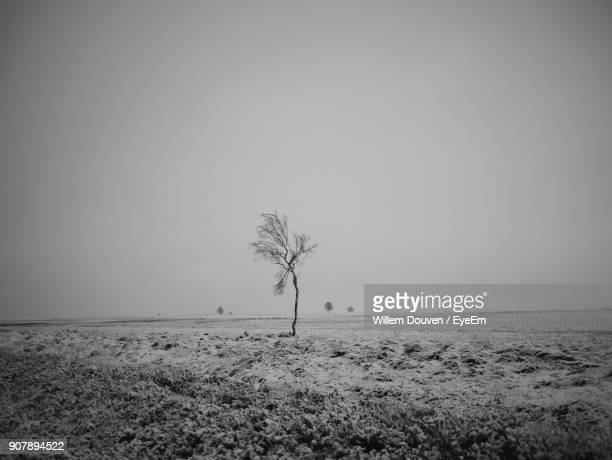 view of lone tree on landscape against clear sky - ardennes department france stock photos and pictures