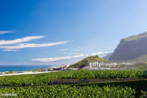 view of los silos town with banana trees in foreground, in north of tenerife island (canary islands, spain) - dähncke fotografías e imágenes de stock