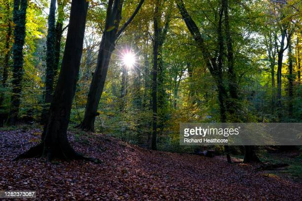 View of low sun shine through the trees in Burnham Beeches on 26th October, 2020 in Burnham, England.