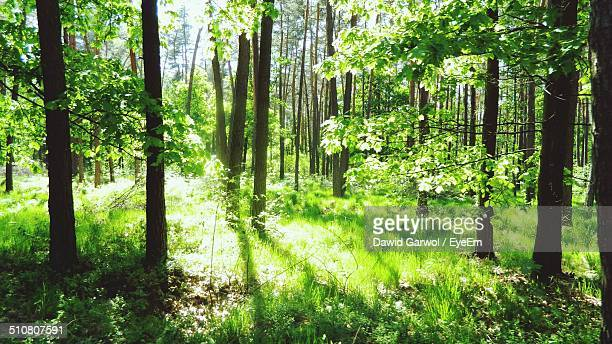 View of lush trees in forest