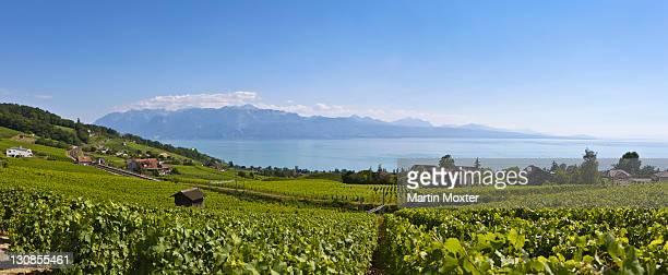 view of lutry, lavaux-oron district, lake geneva, canton of vaud, switzerland, europe - vaud canton stock pictures, royalty-free photos & images