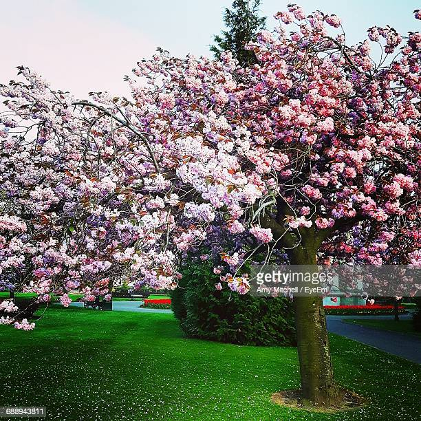 View Of Magnolia Tree In Park