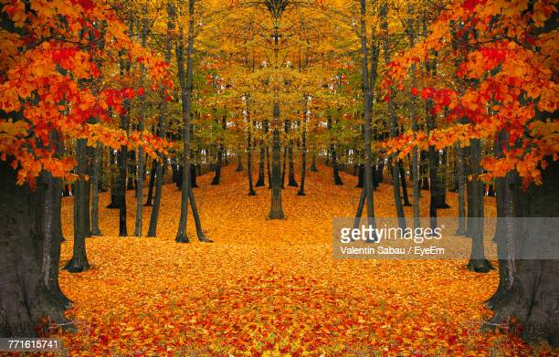 View Of Maple Trees During Autumn
