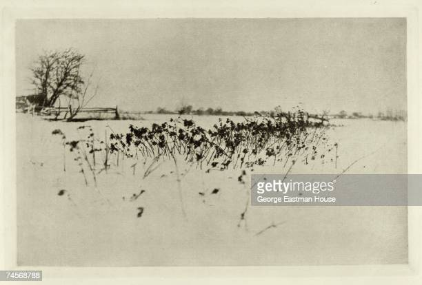 View of marsh grass in the snow, England, 1890s.