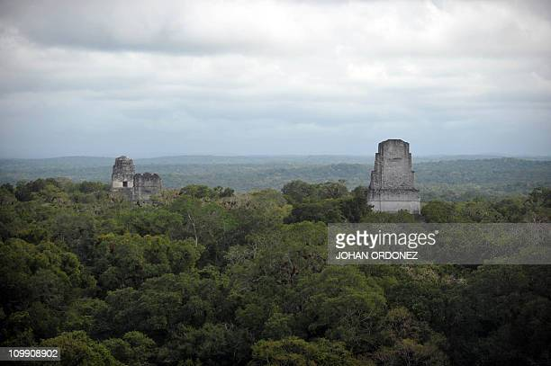View of Mayan temples at the Tikal archaeological site on February 19, 2011 in the municipality of Flores, Peten, 488 km north of Guatemala City. AFP...