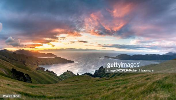 view of meadows and rocky coast at sunset, french pass, marlborough region, marlborough sounds, picton, south island, new zealand - marlborough new zealand stock pictures, royalty-free photos & images
