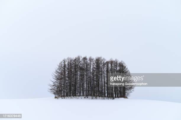 view of mild seven hills at biei, hokkaido, japan - snowfield stock pictures, royalty-free photos & images