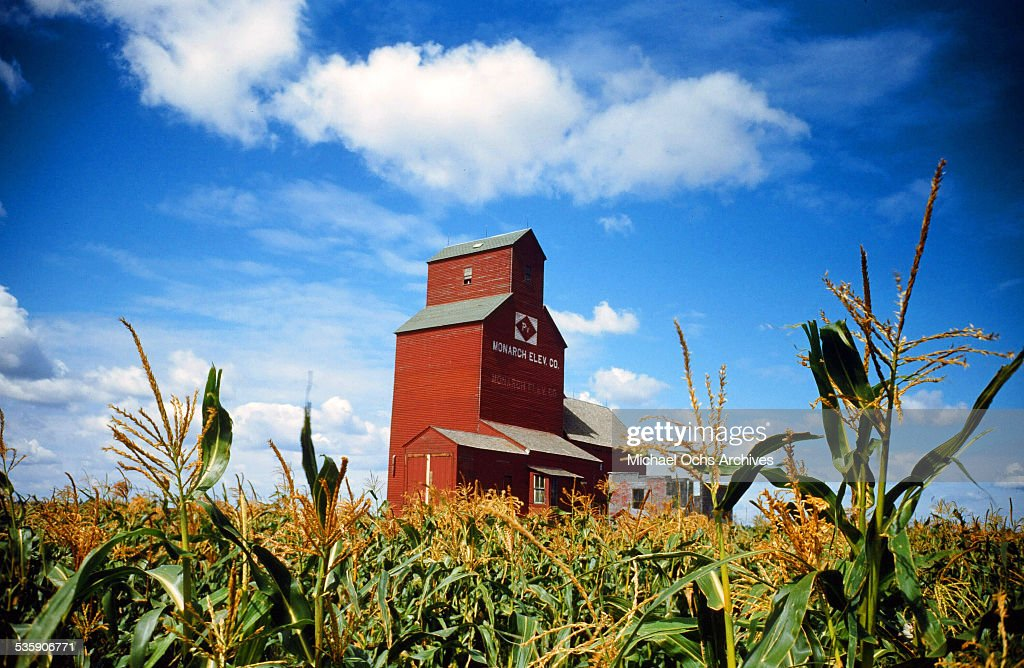 A view of Monarch Elevator Co. in a corn field during corn harvest time.
