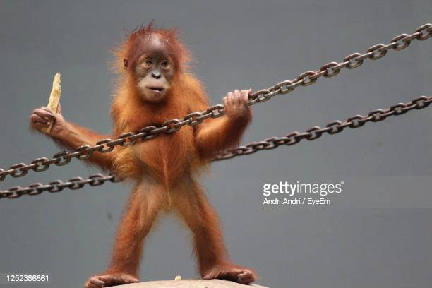 view of monkey on rope - releasing stock pictures, royalty-free photos & images