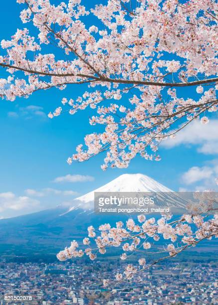 View of Mount Fuji with Cherry Blossom, Japan