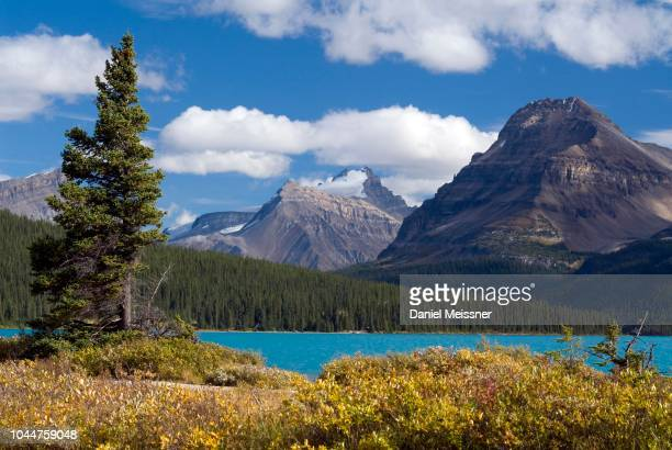 view of mount hector and bow peak towering over bow lake, bow valley, banff national park, alberta, canada - clima alpino foto e immagini stock