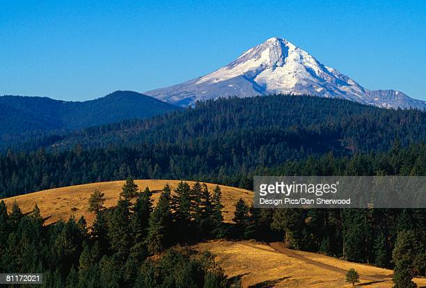 view of mount hood, mount hood national forest - dan peak stock photos and pictures
