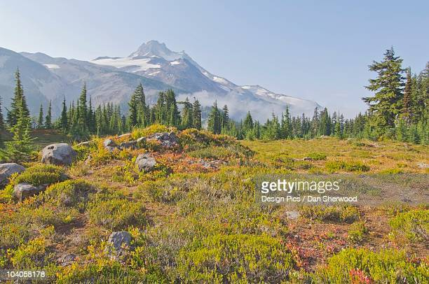 view of mount jefferson from jefferson park - dan sherwood photography stock pictures, royalty-free photos & images