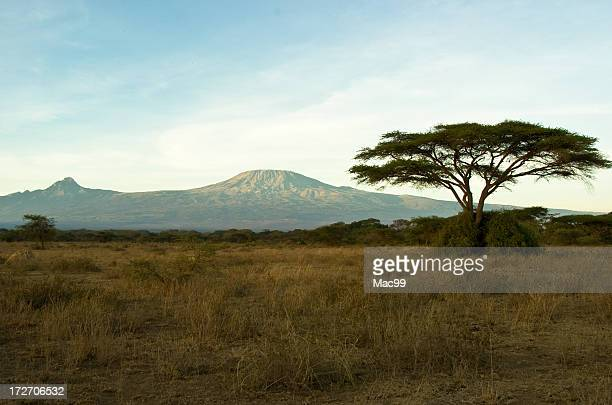 View of Mount Kilimanjaro with thorn tree in the foreground