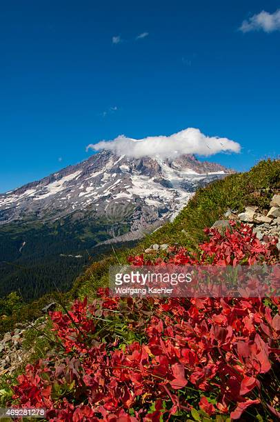 View of Mount Rainier from Pinnacle Peak trail with mountain blueberries in fall colors in Mount Rainier National Park, Washington State, USA.