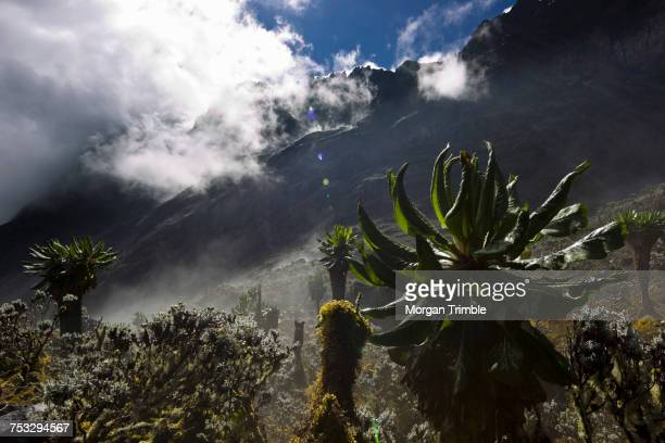 View of Mount Stanley from the Kilembe Route, Rwenzori National Park, Kasese District, Uganda