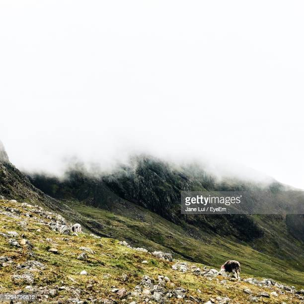 view of mountain landscape against sky - sheep stock pictures, royalty-free photos & images